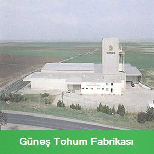 gunes-tohum-fabrikasi